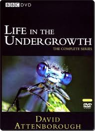 BBC Life in the Undergrowth Box Set.
